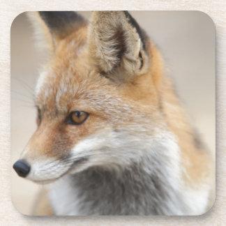 Dessous-de-verre renard
