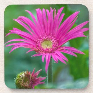 Dessous de verre roses lumineux de fleur