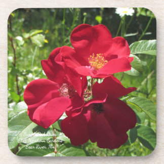 Dessous de verre simples de roses rouges
