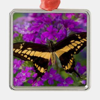 Dessus d'un papillon de machaon ornement carré argenté