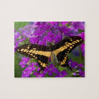 Dessus d'un papillon de machaon puzzle