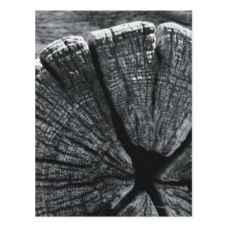 Détail de fibre de bois carte postale