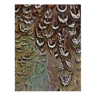 Détail de plume de faisan de Melanistic Carte Postale