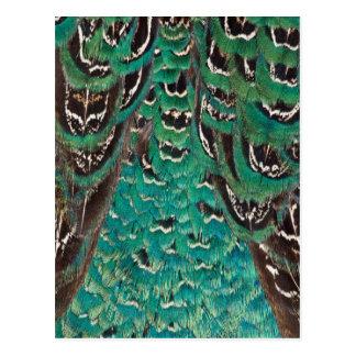 Détail de plume de faisan de turquoise carte postale