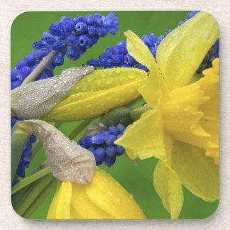 Détail des fleurs de jonquille et de jacinthe. Cré Dessous-de-verre