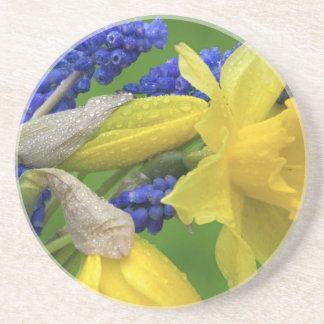 Détail des fleurs de jonquille et de jacinthe. dessous de verres