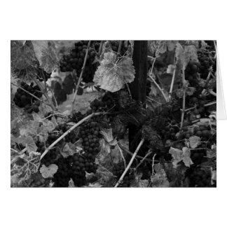 Détail des raisins, Draper Vineyard, Napa, 1966 Carte De Vœux