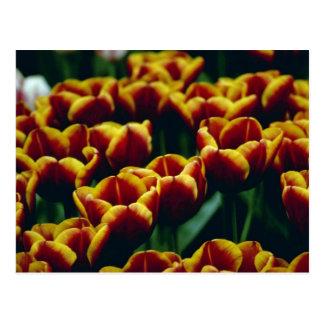 détail jaune des fleurs developpées récemment de carte postale