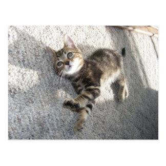 Détendez et étirez la carte postale de chaton