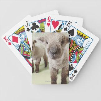 Deux agneaux à l'intérieur avec le papier peint fl cartes à jouer