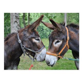 Deux ânes amicaux cartes postales