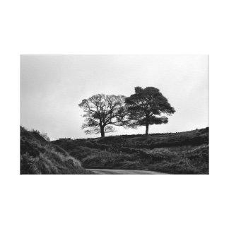 Deux arbres en noir et blanc toile