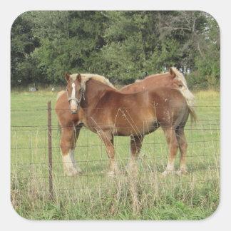Deux autocollants mignons de chevaux assez ambres