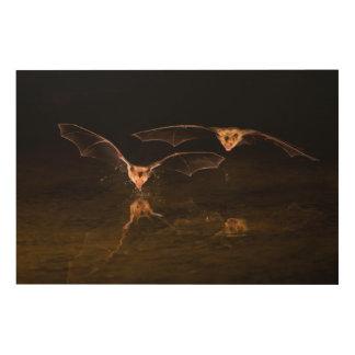 Deux battes volant au-dessus de l'eau, Arizona Impression Sur Bois