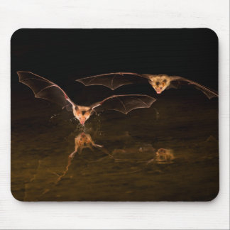Deux battes volant au-dessus de l'eau, Arizona Tapis De Souris