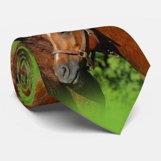 Deux beaux chevaux de châtaigne au soleil cravates