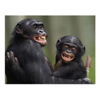 Deux bonobos de sourire cartes postales