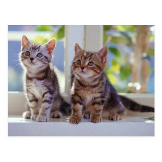 Deux chatons carte postale