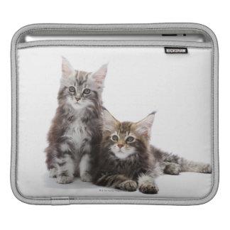 Deux chatons de chat de ragondin du Maine Poches iPad