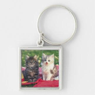 Deux chatons se reposant sur une couverture porte-clé carré argenté