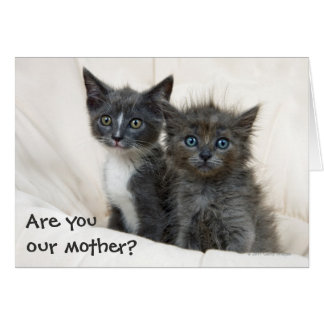Deux chatons tigrés carte de vœux