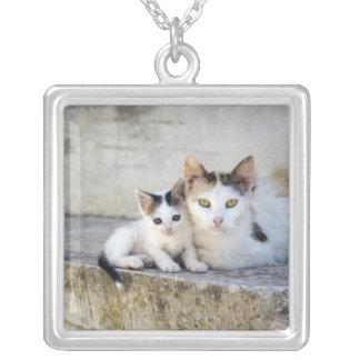 Deux chats sur les étapes en pierre collier