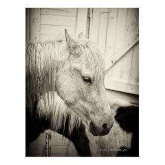 deux chevaux en dehors d'une écurie noire et carte postale