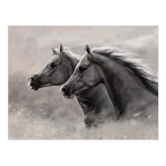 Deux chevaux peignant les étalons noirs de cadeau carte postale