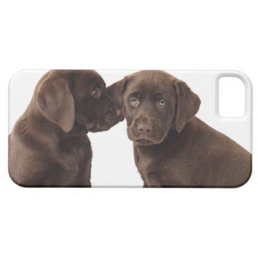 Deux chiots de labrador retriever de chocolat coque Case-Mate iPhone 5
