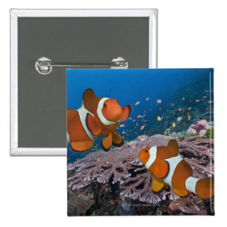 Deux Clownfish Badge