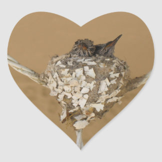 Deux colibris dans un autocollant de nid