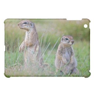 Deux écureuils moulus vigilants, secteur de coques pour iPad mini