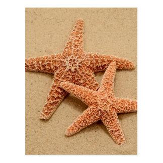 Deux étoiles de mer de sucre carte postale