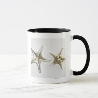 Deux étoiles de mer épineuses tasses