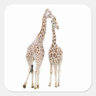 Deux girafes sticker carré