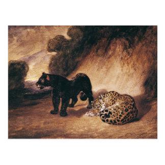 Deux jaguars du Pérou Cartes Postales
