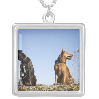 Deux jeunes chiens regardant dans des directions pendentif carré
