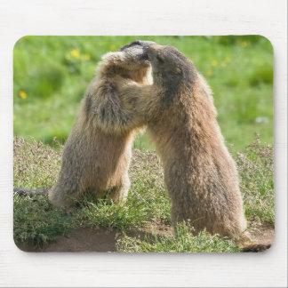 deux jeunes marmottes tapis de souris