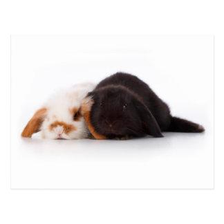 Deux lapins mignons de bébé carte postale