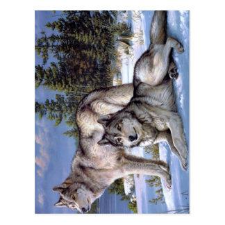 Deux loups dans le Sibérien d'hiver Carte Postale