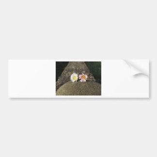 Deux marguerites blanches se trouvant sur la autocollant de voiture