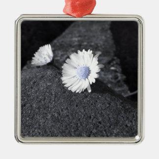 Deux marguerites blanches se trouvant sur la ornement carré argenté