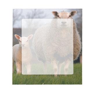 Deux moutons en papier blanc d'agriculteurs de bloc-note