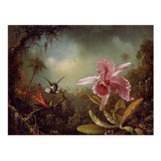 Deux oiseaux de ronflement et une orchidée carte postale
