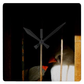 Deux oiseaux mignons de pinson dans la cage horloge carrée