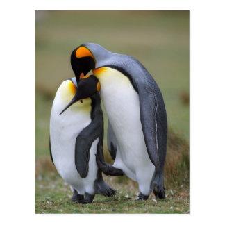 Deux pingouins carte postale