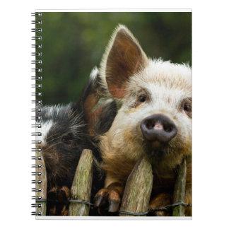Deux porcs - ferme de porc - fermes de porc carnet