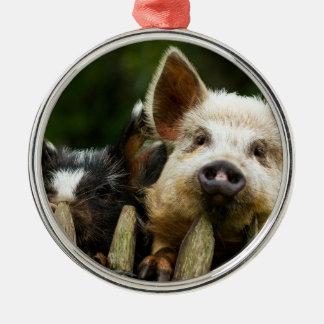 Deux porcs - ferme de porc - fermes de porc ornement rond argenté