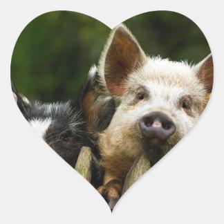 Deux porcs - ferme de porc - fermes de porc sticker cœur