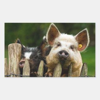 Deux porcs - ferme de porc - fermes de porc sticker rectangulaire